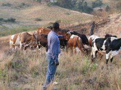 Visit to a traditional Zulu 'Umuzi'
