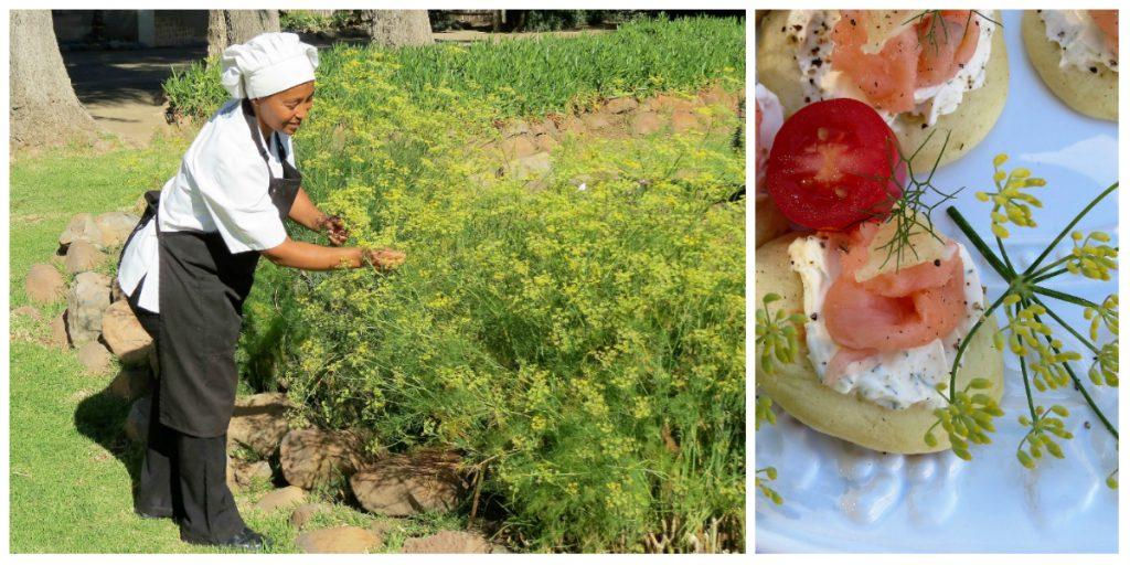 Mount Camdeboo - picking fresh herbs
