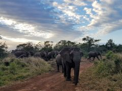 Thanda Safari and why you never miss a game drive