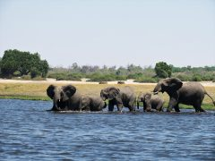 Chobe Game Lodge – elephants and eco-initiatives