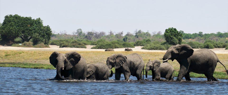 Chobe Game Lodge – elephants and eco-initiatives