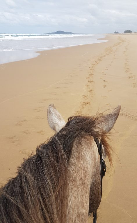Bhangazi Horse Trails