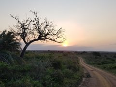 iSimangaliso Wetland Park & St Lucia – things to do