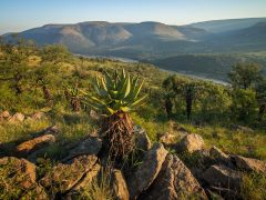 Babanango Game Reserve, the fulfilment of a dream