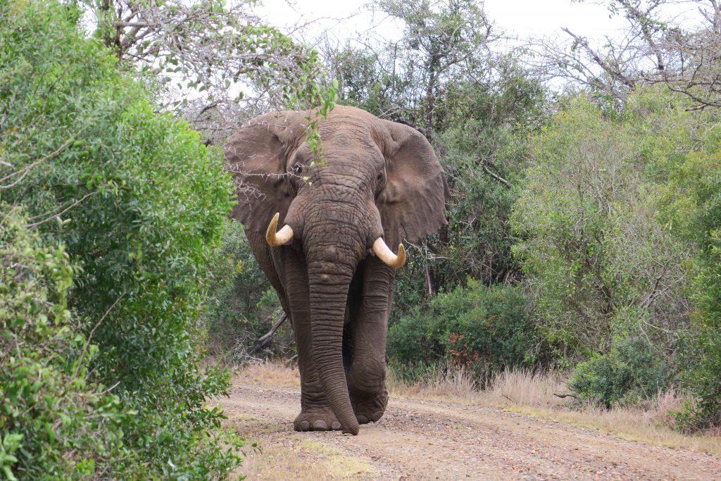 uMkhuze Game Reserve