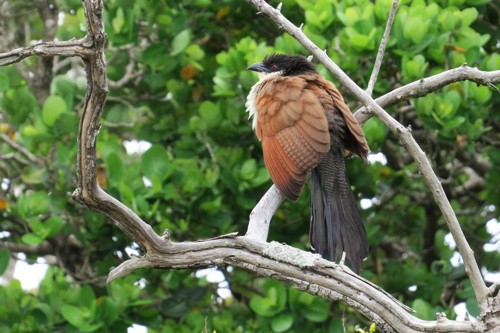 Birding iSimangaliso Wetland Park