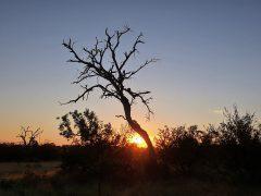 Baobab Ridge for a REAL safari experience
